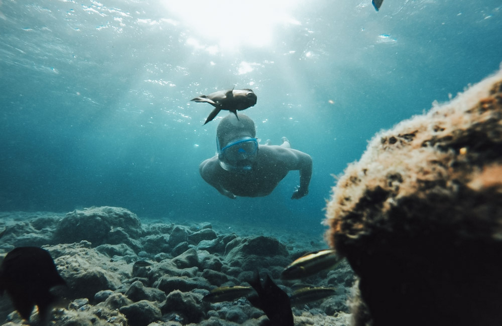 Snorkeling and Dolphin Cruise