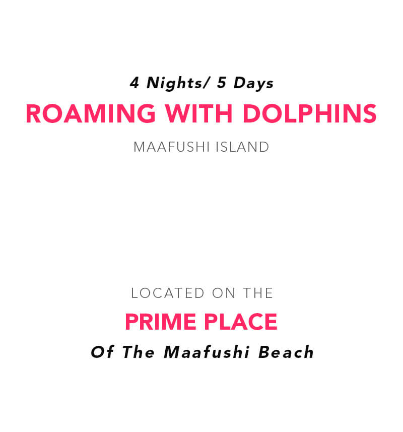 Roaming with Dolphins